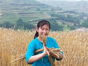 麦收季节,我的农民姐姐