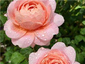 雨后�B�Z花香