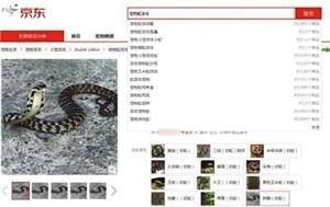 女子网购银环蛇被咬伤后脑死亡