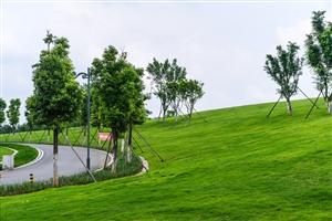 【镜头】仁寿湿地公园繁花似锦,生机勃勃。