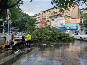大风过后,注意安全树都连根拔起了