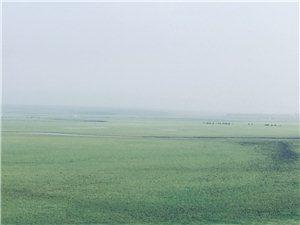 清晨的向阳湖大草原