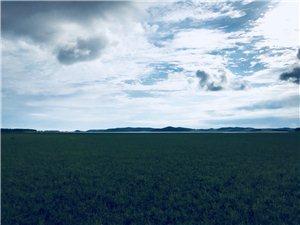 湖波涨新绿最美向阳湖
