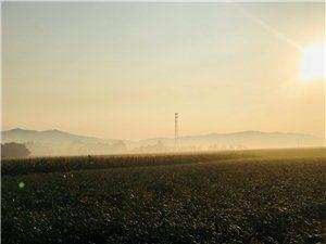 乡间晨雾缭绕