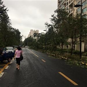 台风过了,早上好