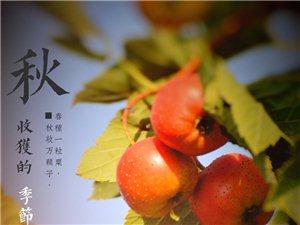 北方的秋天色珍斑澜