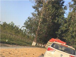 文城路段晒粮食影响道路通行