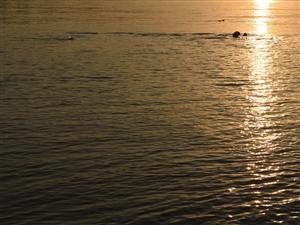 梧州西江遇见爱游泳的人