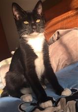 有没有真心喜欢猫咪的小可爱~健康可爱的小黑猫可领养!很乖,就是有点胆小。希望有爱猫的好心人收养,