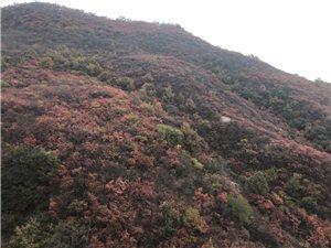 唐多令.游秋晚秋登高,秋色五彩斑斓,连绵不断与山岚相混似彩云流向天涯尽处……