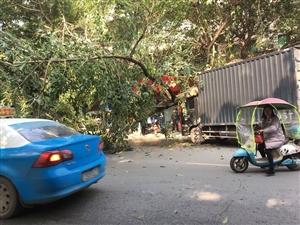突发!富顺发生车祸,路边的大树都被撞断了!
