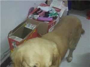 这是谁家的狗丢了,请前来领取。