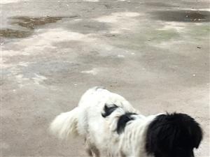 谁的狗狗丢了