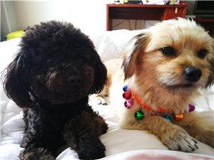 诚心寻找爱狗人士收养