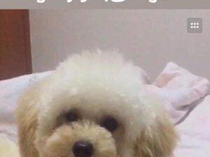 狗狗在2月17號丟了
