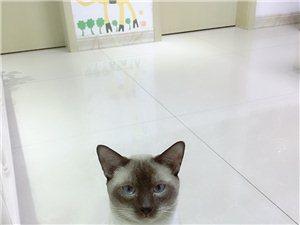 给自家猫咪帅哥找个漂亮媳妇儿