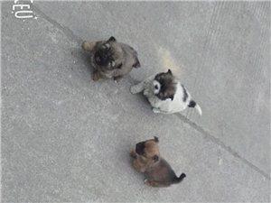 宠物狗领养