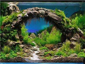 大自然景观设计水族馆