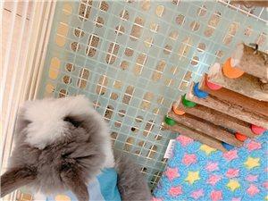 爆毛款盖脸猫猫兔