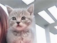 本人想领养一只小猫咪