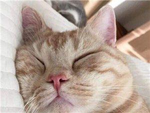無償領養小貓咪
