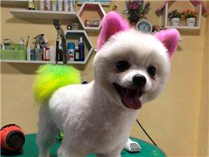出售博美幼犬
