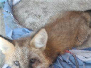 ��物狐�