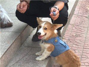 給我的狗狗找個愛它的主人