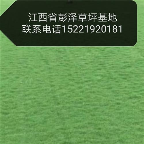 草坪批發    聯系電話15221920181微信同號