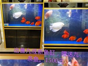原价2000多的鱼缸,九成新,赠送九条鱼,现价1400元。联系电话15663019008