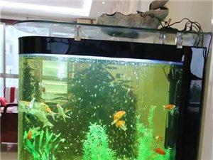 长1.2米 宽0.4米 生态鱼缸 带所有东西转让