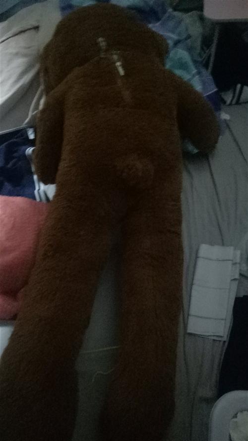 玩具熊,160cm,入手不到一个星期,毛很顺,不毛糙不打结,9成新。冬天抱着睡觉超级暖和。没有男朋友...
