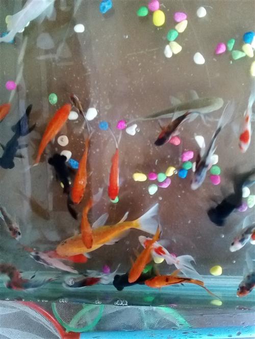 各种观赏鱼出售,有金鱼,草金,五花锦鲫,乌龟,各种小型热带鱼,送货上门!有需要的朋友加我微信kxy1...