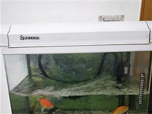 要搬家九成新鱼缸闲置挥泪出售,原价580买的现在120