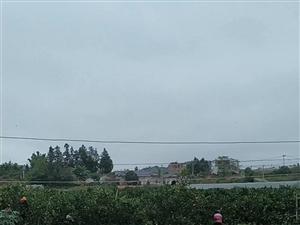 果园转租,面积(8.2亩),年租金每亩650斤谷,地址(圳下村公路边),现有200株左右挂果大树,另...