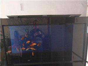金海王1.56米�~缸出售