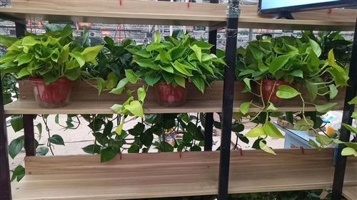 出售各种绿箩,绿植,一盆起送,有需要的联系,微信同号