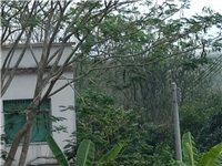 長期收購:廢棄模板,頂木 橫條 格子板  木料家具  等干木料,聯系13976404607