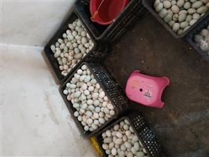 自家养的鸭下的土鸭蛋,想吃的找我哟!和庆地区可以送货上门。