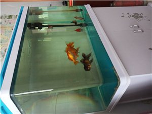 82公分x52公分x34公分14OL容�e8毫米加厚玻璃,���I�z月新水族箱。
