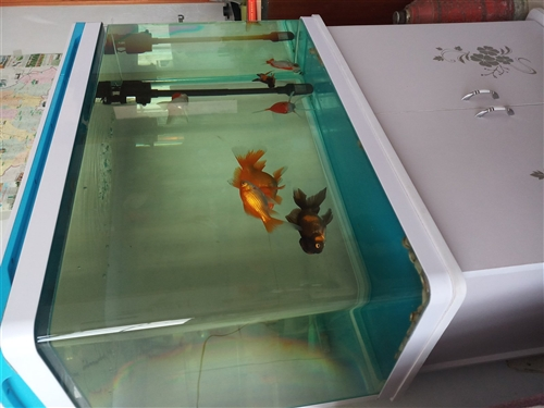 82公分x52公分x34公分14OL容积8毫米加厚玻璃,刚买俩月新水族箱。