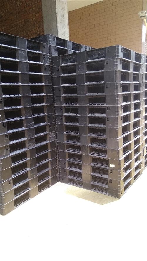 福建长期回收出售二手塑料托盘,木托盘,铁托盘量大价优,15959561547郭先生