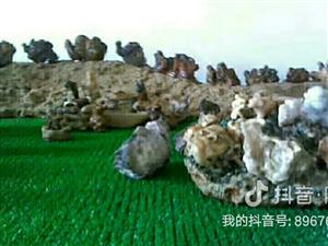 這個都是阿拉善天然奇石,有喜歡的聯系13948005264