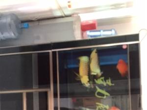 13629127125二手鱼缸和鱼有中意的电话联系连