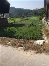 老龙镇涧洞村委会瓦口村路口多个地皮出售