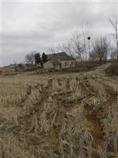 农庄养生园