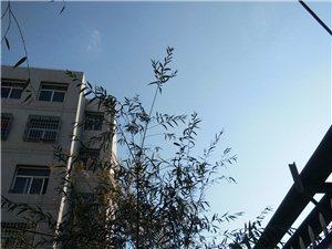 秦安县兴国镇桃园小区2室 1厅 1卫24.5万元