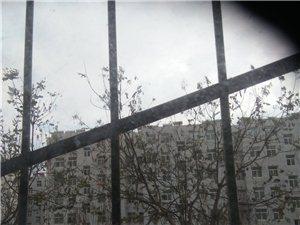 秦安县桃园小区房屋出租
