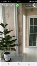 十中学区幸福花园2室 1厅 1卫37.5万元