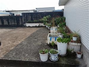 街心花园雨润花7楼送花园3室 2厅 2卫53.8万元